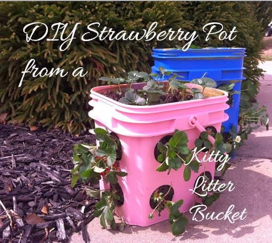 Reuse Kitty Litter Bucket as Planter