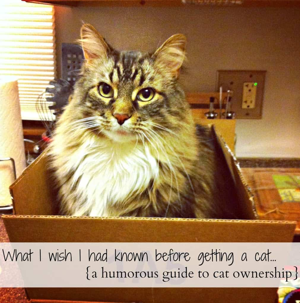 What I Wish I Had Known Before Getting a Cat Life a Little